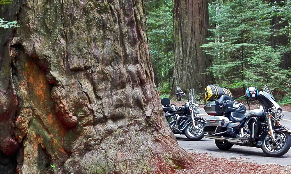 Motorrad-Reisen California Goldrush - 9; Tag: Gold Beach – Newton Dury Scenic Parkway – Redwood Nationalpark
