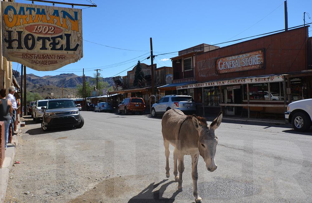 Route 66 mit der Harley - Oatman, AZ