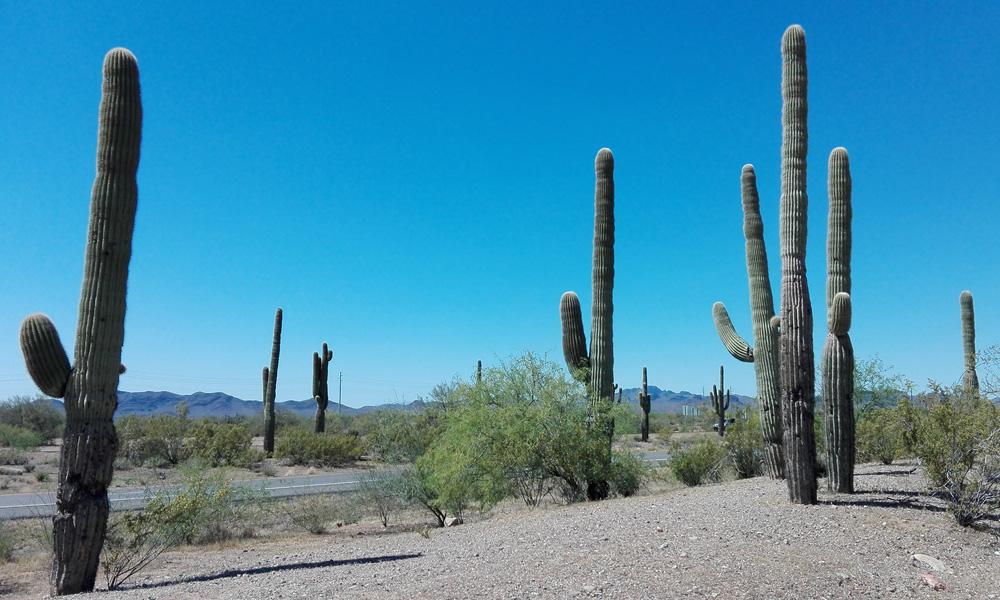 Motorrad-Reisen USA Arizona- Amerika Heller